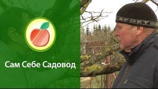 видео Что делать с лишайником и мхом на деревьях?