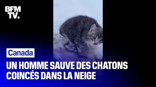 Au Canada, un homme sauve trois chatons gelés grâce à son café