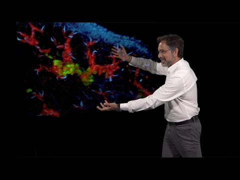 Alejandro Sánchez Alvarado (Stowers, HHMI) 3: Regeneration: Expanding the number of model systems