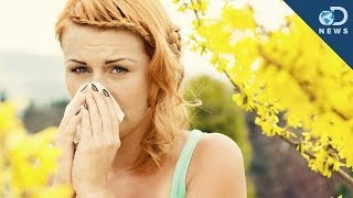 Repeat youtube video Why Do We Get Allergies?