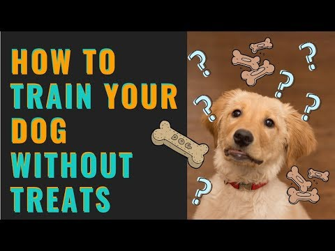 How to Train a Dog Without Treats (Get Your Dog to LISTEN Without Treats)