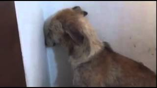 Paws - Lurcher, Angel,  in distress