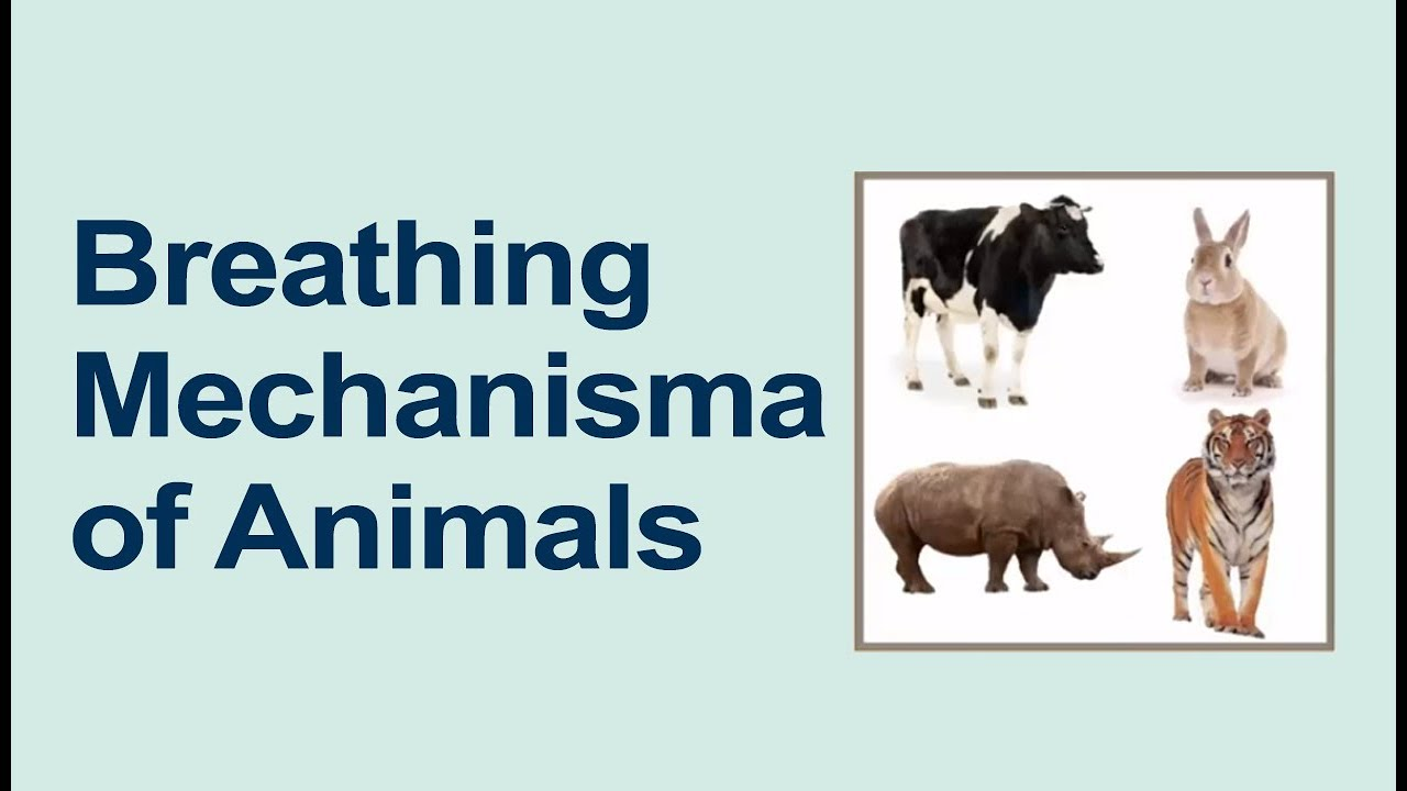 medium resolution of Class 5 Science   Respiration in Animals   Breathing in Animals   Pearson -  YouTube