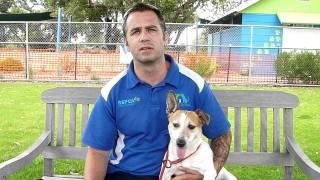 Rspca Wa Fireworks Advice With Chris From Dog Training