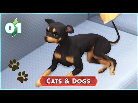 The Sims 4: Cats and Dogs | Ep.01: Creating my Dog and Vet Clinic