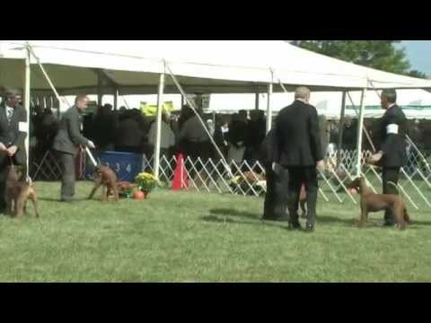 The 2014 Irish Terrier National Specialty