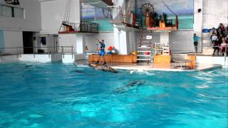Дельфинарий Набережные Челны. Морская львица.MOV