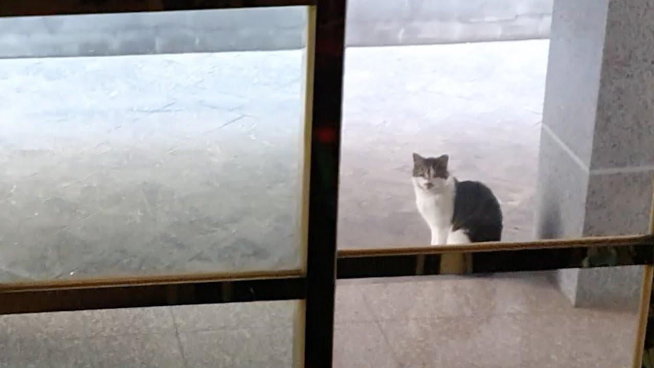 [ENG]집앞에서 하루종일 기다리고 있는 길고양이