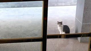 집앞에서 하루종일 기다리고 있는 길고양이