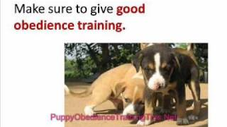 Puppy Obedience Training - How To Stop Your Dog From Nipping And Biting