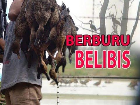 BERBURU BELIBIs!! muara pasir kaltim#