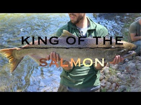 Chinook Salmon Fishing- Salmon River Idaho