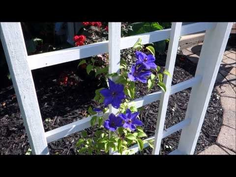 Early-Summer Organic Garden Tour 2015: Flowers, Flowers, and More Flowers (TAKE 2)