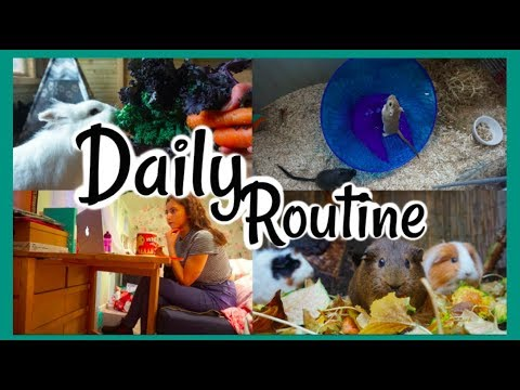 NEW DAILY ROUTINE (the pets and me)