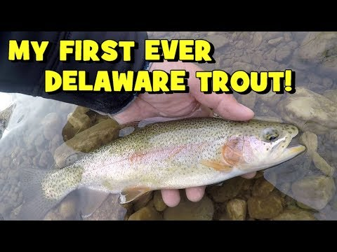 TROUT Fishing The WHITE CLAY CREEK!