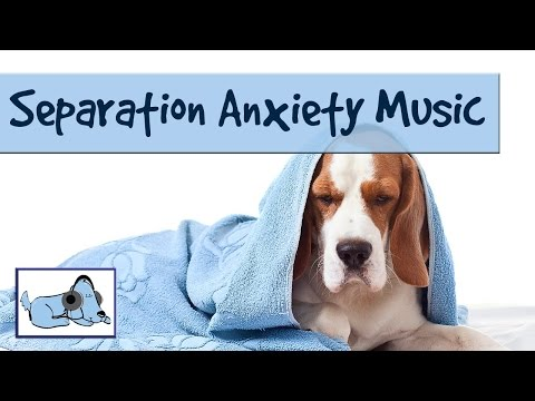 Relaxing Music to Help Cure Separation Anxiety in Dogs. Relax My Dog Music.