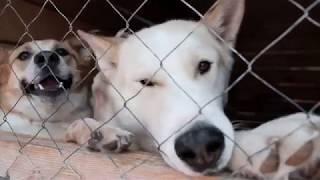 """Приют для собак """"Душа Бродяги"""" г. Калуга"""