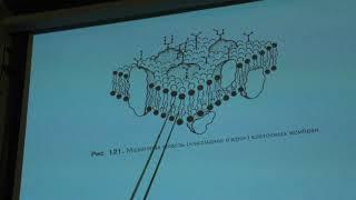 Тимонин А. К. - Высшие растения - Строение про- и эукариотической клетки
