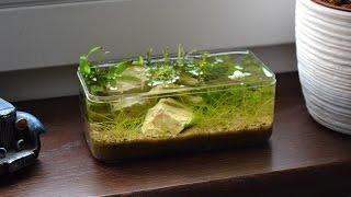 Little aquarium box - nano aquarium setting up.