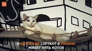 Рязань: котокафе loftkot