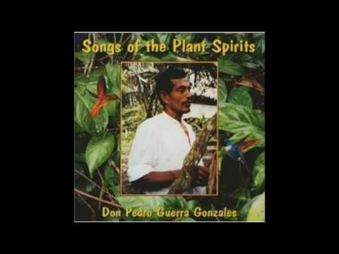Don Pedro Guerra Gonzales - Songs Of The Plant Spirits - 2001 [FULL ALBUM]