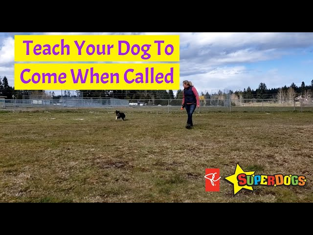 SuperDogs | Teach Your Dog To Come When Called | Dog Training