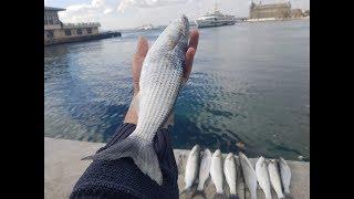 Kefal Avı Nasıl Ve Nerde Tutulur ? Kıbrıs Olta Takımı Nedir 2018 balık avı