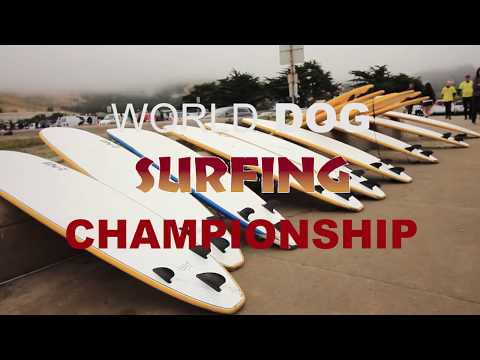 World Dog Surfing Championship! Dogs, Pig, Adoptions