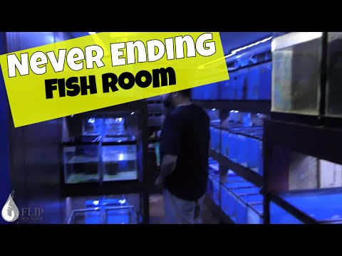 The Never Ending Fish Room Tour - 450 Aquariums , Rooms 1 - 3