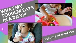 WHAT MY TODDLER EATS IN A DAY 2020!! PICKY EATER IDEAS!!