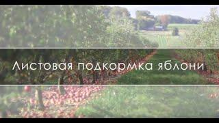подкормка яблони весной: схема + видео
