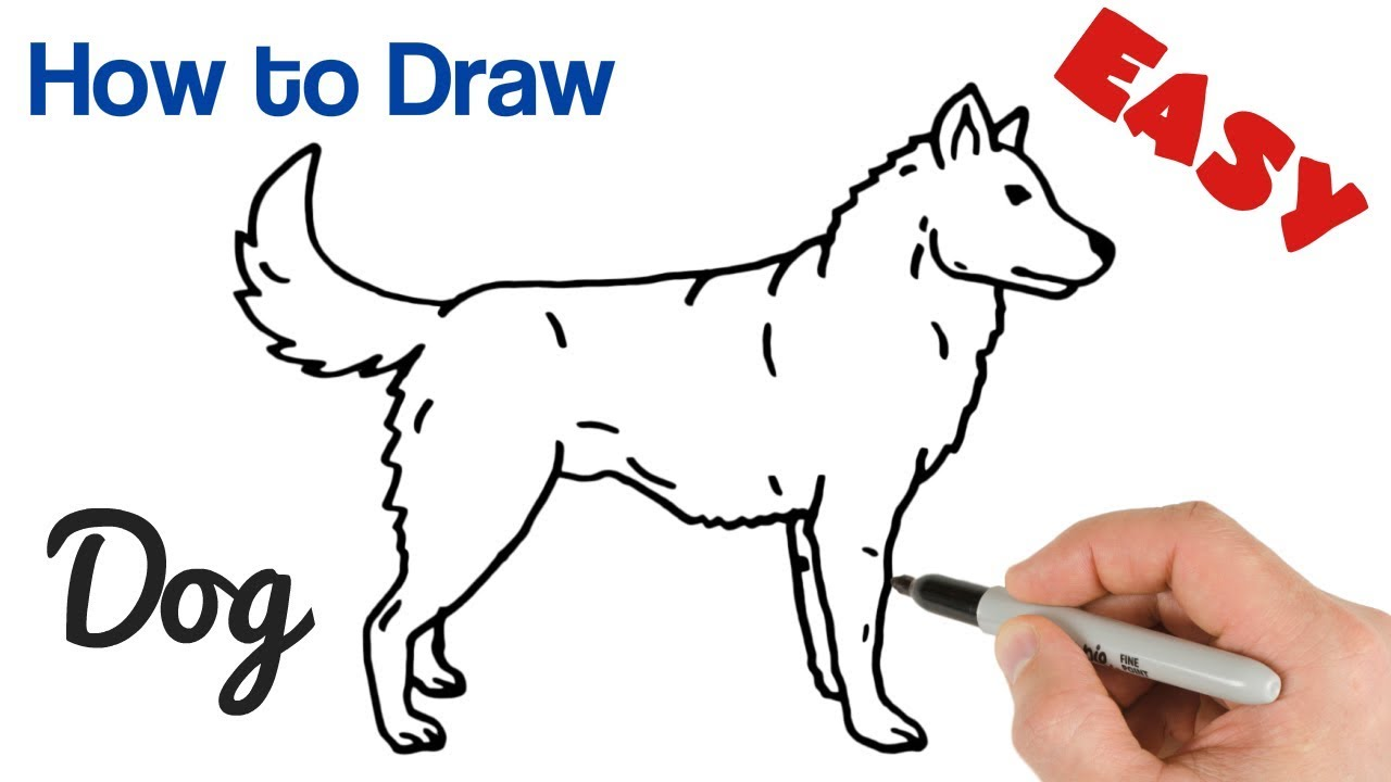 How To Draw A Dog Easy Step By Step Animals Drawings For Beginners Youtube