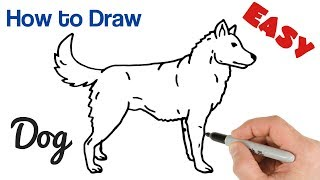 How to Draw a Dog Easy Step by Step   Animals Drawings for Beginners