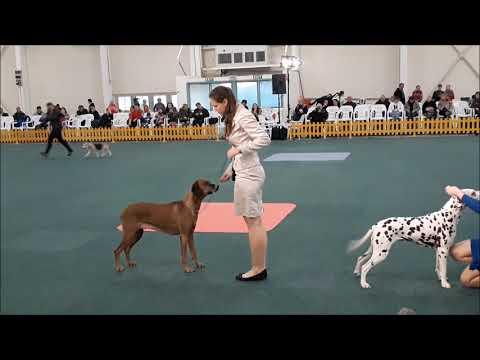 17 2 2018 Victory Dog Show Bratislava