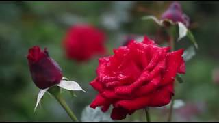 Romantic Piano Music _ Beneath th Moonlight,Marigold ,Relaxing Music