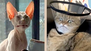 (Re-Upload) BEST CAT MEMES COMPILATION OF 2020 PART 18 (FUNNY CATS)
