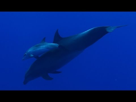 Diving French Polynesia 4k GH4 Sealux
