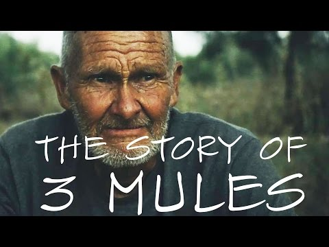 Interesting People:  3 mules and his story (full interview)