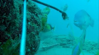 Underwater in Moreton Bay - Around Bulwer Ledge and Drop Off