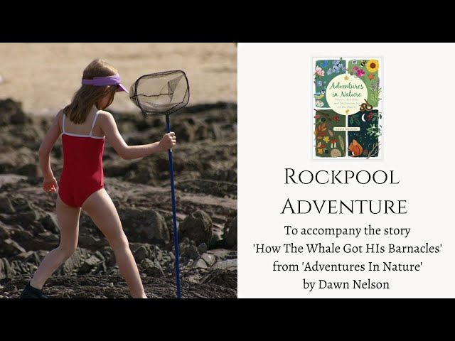 Seashore Adventures - With Guest Expert Emily Stroud