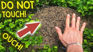 Finding Queen Ants & Colonies #1 | My Trip to the Black Forest, Germany