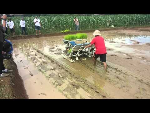 Mesin tanam padi / Rice transplanter ALPUZ PF48