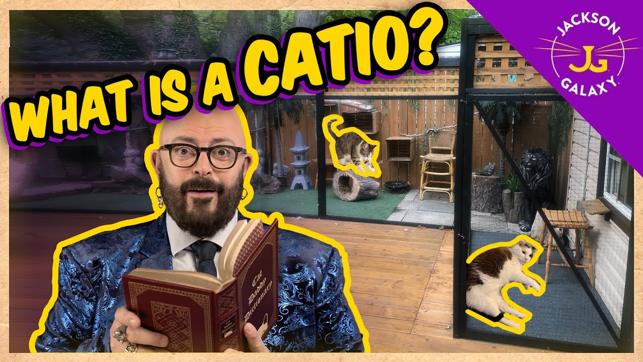 What is a Catio? | Cat Daddy Dictionary