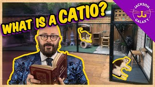 What is a Catio?   Cat Daddy Dictionary