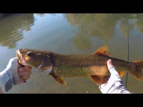 Russian River Fishing (Northern California)