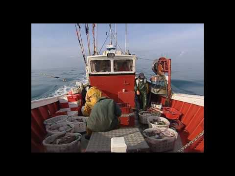Des pêcheur sénégalais en baie d'Arcachon - Documentaire