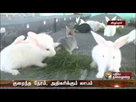 8220943012 முயல் விற்பனை  Muyal Valarpu Rabbit Farming Tamilnadu