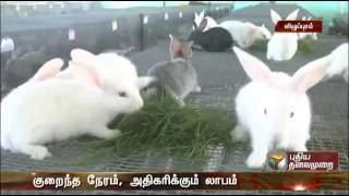 Video 8220943012 முயல் விற்பனை  Muyal Valarpu Rabbit Farming Tamilnadu download MP3, 3GP, MP4, WEBM, AVI, FLV Oktober 2018