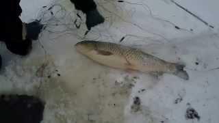 Браконьеры ловят рыбу зимой сетями!(Браконьеры ловят рыбу сетями зимой Подписывайтесь на YouTube канал: http://goo.gl/LdKehC Блог: http://sovetiohotnikam.ru/ Приманка..., 2015-11-25T19:54:11.000Z)