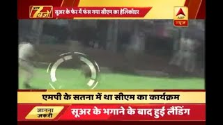 MP: When a pig stopped CM's helicopter from landing in Satna
